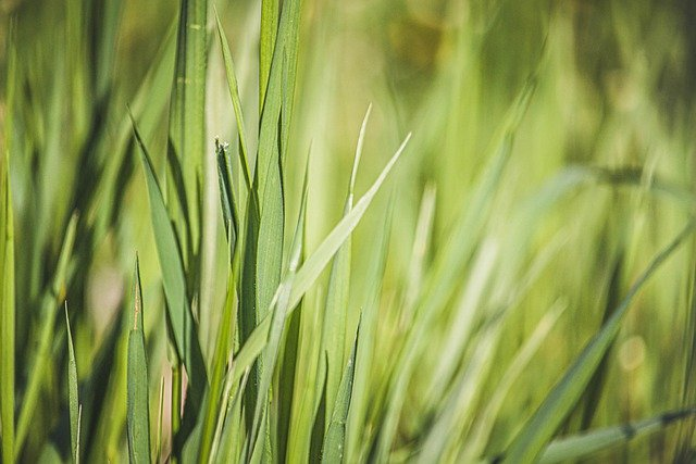 Green Nature Meadow Field Green  - MolnarSzabolcsErdely / Pixabay